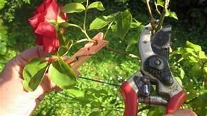 Rosen Schneiden Zeitpunkt : rosen schneiden ohne gestochen zu werden frag mutti ~ Frokenaadalensverden.com Haus und Dekorationen