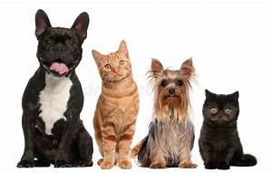 Group Of Cats And Dogs Sitting In Front Of White Stock