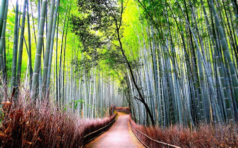 bamboo, Forest, Road, Nature Wallpapers HD / Desktop and ...