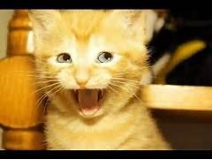 FUNNY CAT VIDEOS PART ...