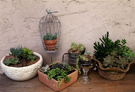 Succulent Designs… Fun With Unusual Containers! The