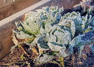 How to Shelter Plants from Frost and Snow   Ottawa Landscaping