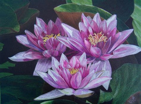 Image Result For Realistic Colored Pencil Drawings Art
