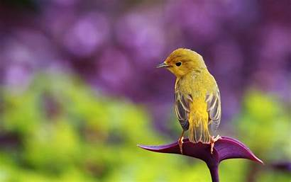 Bird Wallpapers Fantastic Yellow Flower Purple