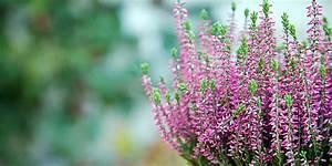 Blumen Für Schattigen Balkon : winterbepflanzung f r den balkon balkonbepflanzung im winter ~ Orissabook.com Haus und Dekorationen