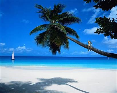 Paradise Animated Tropic Beach Desktop Beaches Tropical