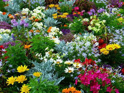 Garden Of Flowers free images meadow herb botany colorful flora