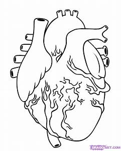 Step 5. How to Draw a Human Heart