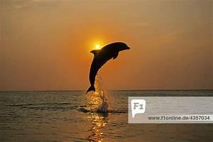 Sonnenuntergang Berechnen : flasche nase delphin sprung sonnenuntergang roatan honduras silhouette sommer mit ~ Themetempest.com Abrechnung