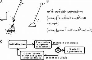 33 Free Body Diagram Of A Pendulum
