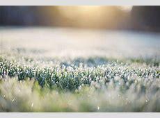 Frost Auf Gras Am Frühen Morgen · Kostenloses Foto auf Pixabay