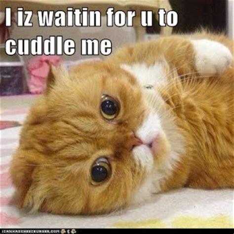 Cuddle Meme - cuddle cat meme www pixshark com images galleries with a bite