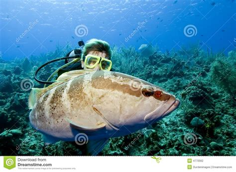 grouper diver interacting preview