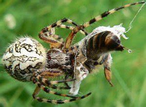 Pflanzen Gegen Spinnen : spinnen ~ Lizthompson.info Haus und Dekorationen