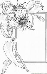 Coloring Pages Lily Flower Spring sketch template