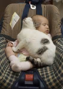 cats and babies pic pictures baby sleeping with cat cat
