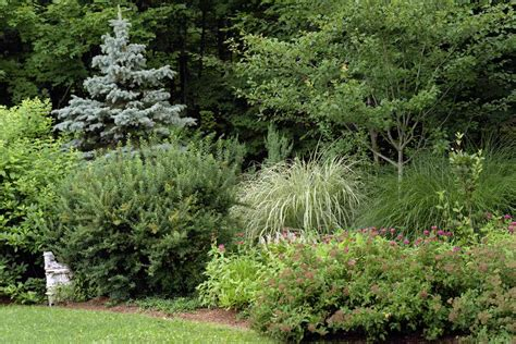 garden shrubs shrub and grass planting in woodstock ny gayle burbank landscapesgayle burbank landscapes