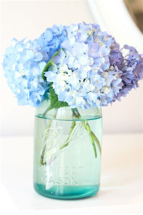How To Revive Roses In A Vase - boiled water method for reviving wilted hydrangeas for