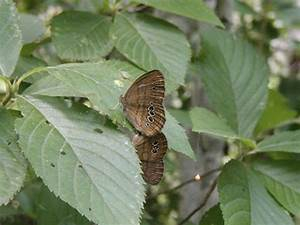Who Can Identify the World's Rarest Butterfly | Science ...