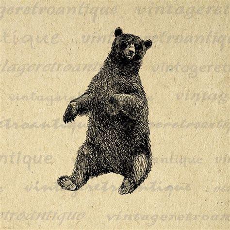 printable graphic sitting bear  antique animal