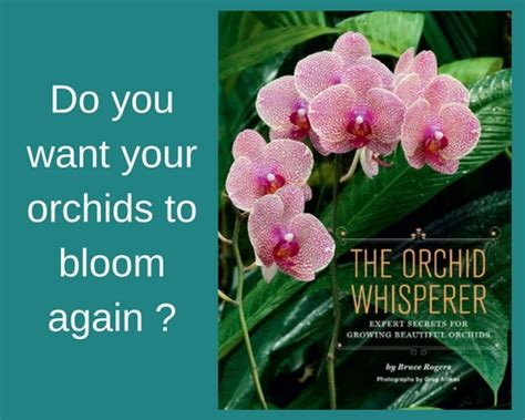 how to make orchids bloom again orchid origin history of orchids