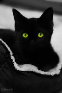 black cats with green black cat green when i get a pet someday
