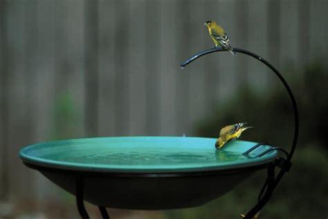 splash dash and play wild birds unlimited