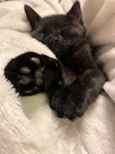 Correctly stored coffee beans are what amounts to a perfectly balanced and flavored coffee. Internet, meet Dobbie's toe beans. Toe beans, meat Reddit. : toebeans