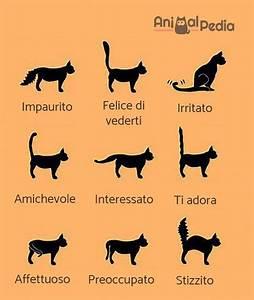 Il linguaggio del corpo dei gatti Immagini ed esempi