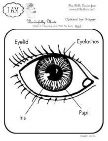 Human Eye Diagram for Kids Printable
