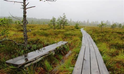 #PaliecMājās: Latvijas valsts meži uz laiku slēguši purvu ...