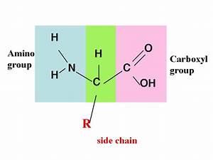 Biochem80p