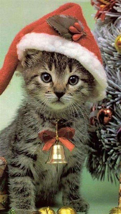 17 best images about dieren in kerstsfeer pinterest christmas animals merry christmas and
