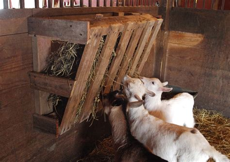 goat hay rack ohio thoughts easy hay feeder