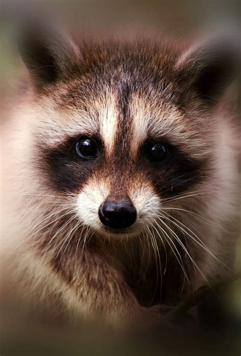 Cool Baby Animal Wallpapers - 44 best images about animal backgrounds on