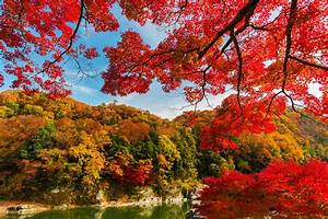 A, Complete, Fall, Color, And, Autumn, Leaf, Viewing, Guide