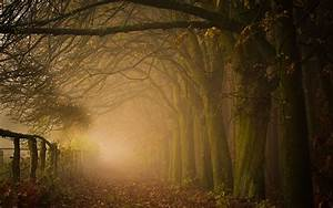 #path, #leaves, #forest, #mist, #nature, #trees, # ...