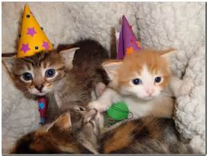 Happy Birthday Kittens and Puppies