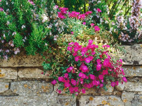 flowers for rockery plant a rockery wall hgtv