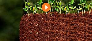 Kirschlorbeer Selber Ziehen : pflanzen online kaufen bei obi ~ Orissabook.com Haus und Dekorationen