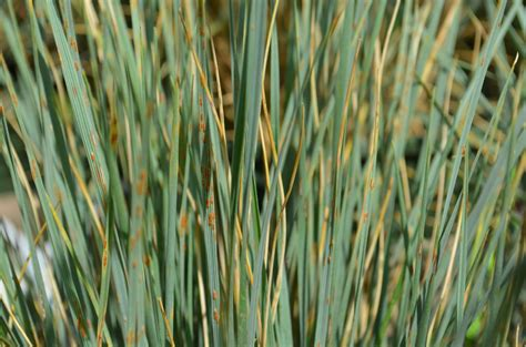 add ornamental grass to your landscape