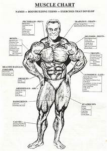 Check The Best Bodybuilding Website  Like And Share
