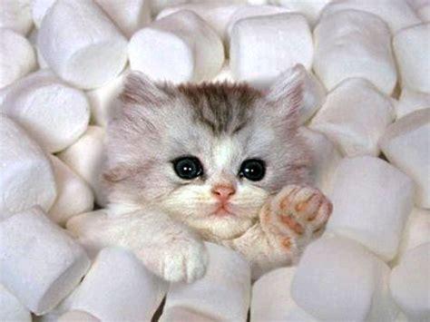 adorable kitties kitties photo  fanpop