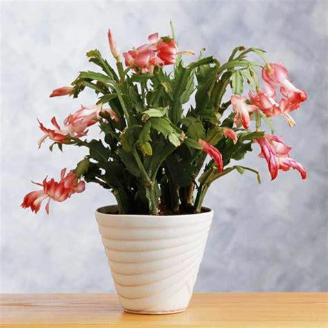 Zimmerpflanze Rote Blätter by Zimmerpflanzen Bl 252 Hend Beleben Sie Ihr Zuhause