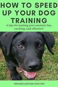 best 25 dog behavior ideas on pinterest dog training With dog behavior training tips