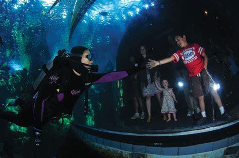 dive    aquarium   pacifics dive immersion
