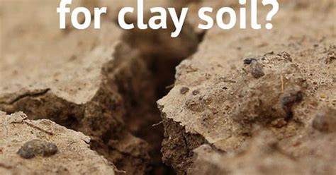 plants that grow in clay soil and shade the best plants for clay soil grow in full sun and partial shade sun the o jays and clay