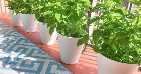 turn  cheap trash    flower pot planter hometalk