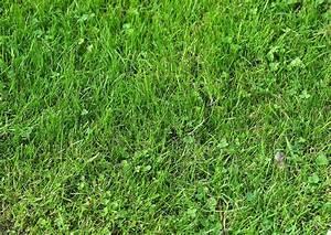 Was Tun Gegen Maulwürfe Im Rasen : moos im rasen moos im rasen wir sind im garten moos im ~ Lizthompson.info Haus und Dekorationen