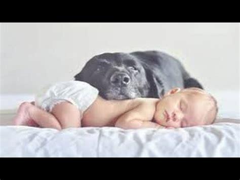 lustige hunde beste tier babysitter fuer babys